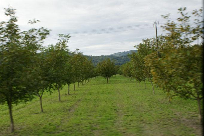 Mehr Nussbäume