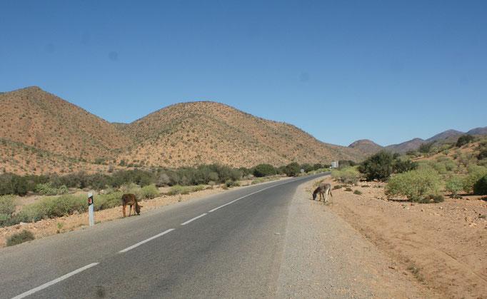 Auf dem Weg bilden die Esel immer mal wieder einen Spalier.