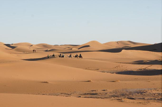 Kamelausflug in die Dünen