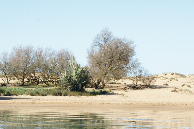 Sandbänke