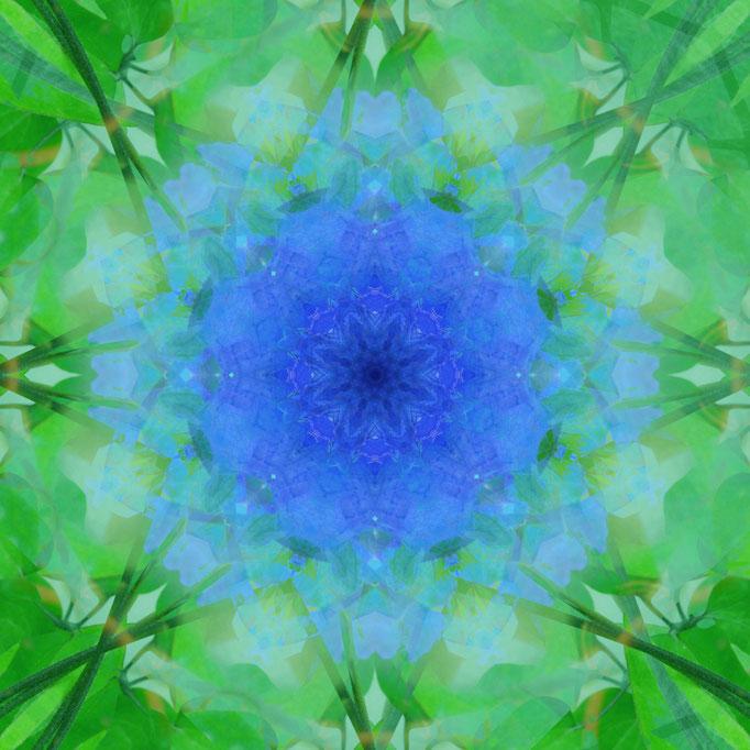 Mandala Clematis-Blüte