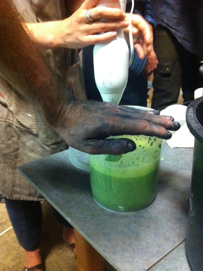 Extraction d'indigo