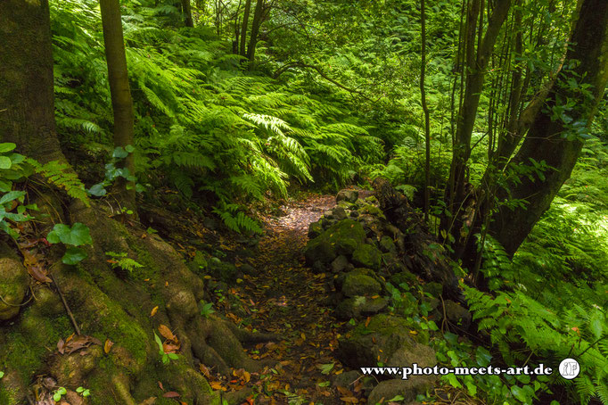 Spanien - La Palma - Cubo de la galga - Fotos by Ivano Fargnoli - www.photo-meets-art.de