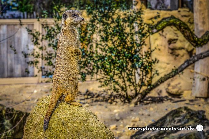 Krefeld - Zoo - Fotos by Ivano Fargnoli - www.photo-meets-art.de