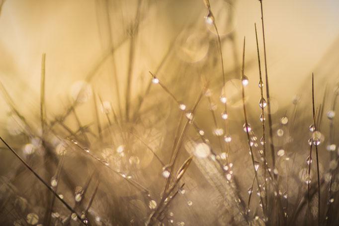 Lovely Dew