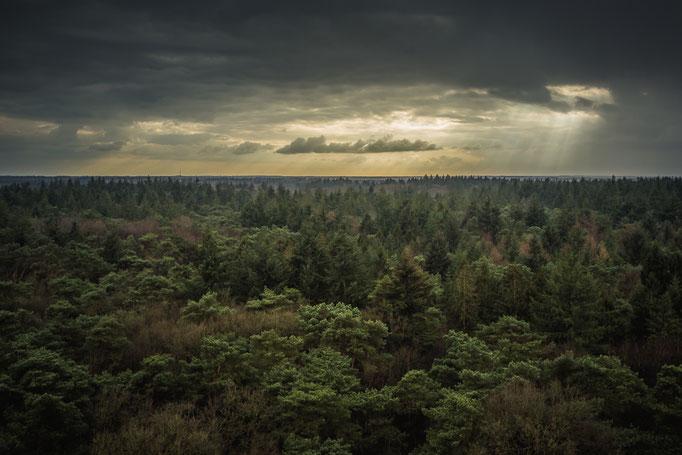 Uitzicht op het Drents Friesche Wold Appelscha vanaf de bosbergtoren
