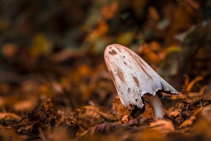 Paddestoel in herfstsfeer