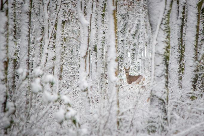 Ree in winters bos