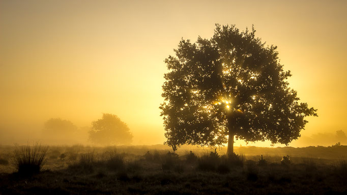 Golden Sunrise - Aekingerzand Appelscha