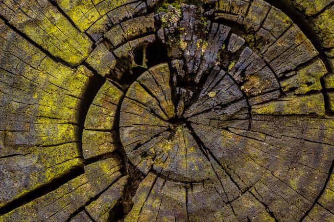 detail houten biels