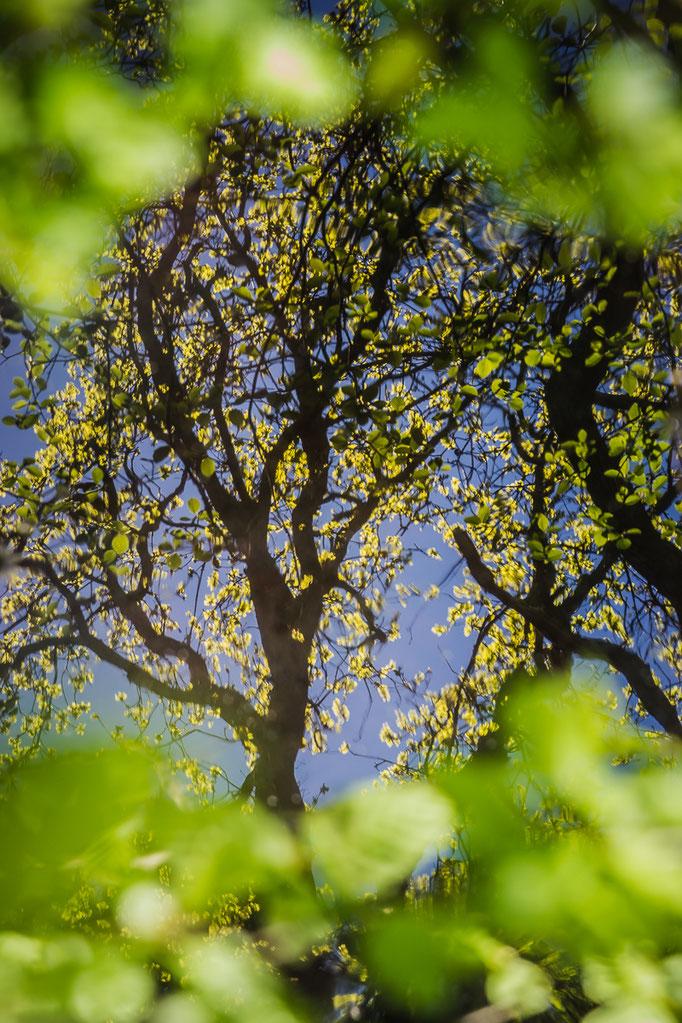 Lente reflectie
