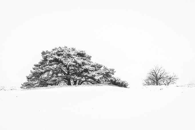 minimilstisch sneeuwlandschap