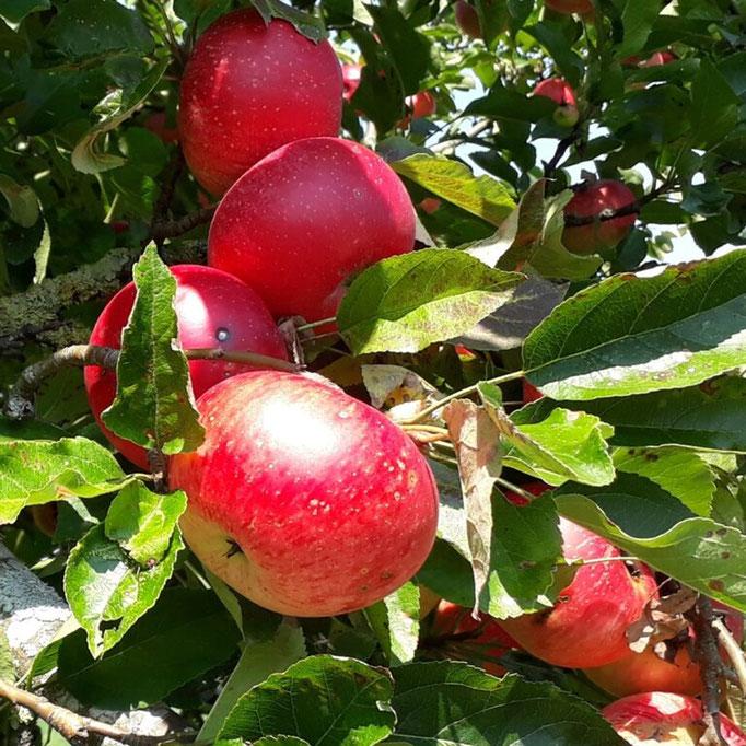 Tour 1  Äpfel