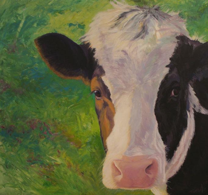 Jonge koe, acryl op linnen, 50 cm x 50 cm VERKOCHT