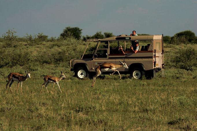 Parco Kruger