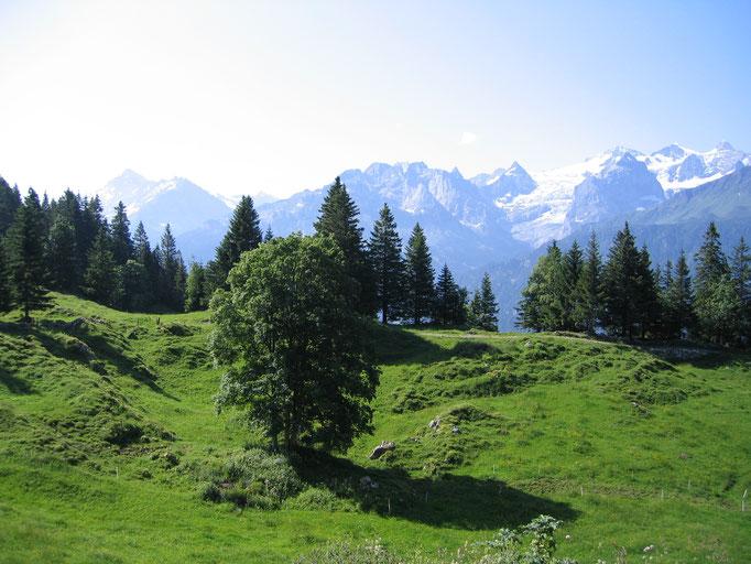 Fantastischer Ausblick zu den Engelhörnern, Wellhorn und Wetterhorn.  Bild: C. Schatzmann