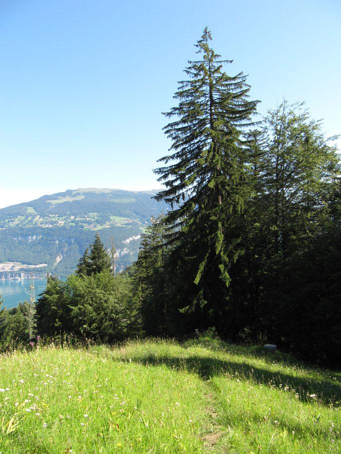 Blick über den See zum Niederhorn.  Bild: C. Schatzmann