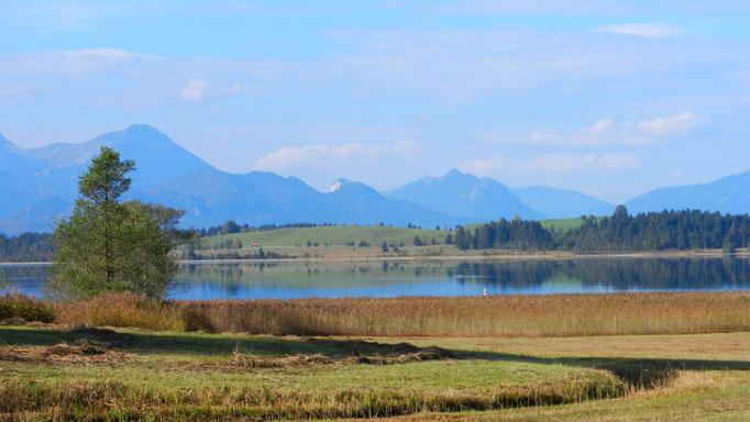 Der Bannwaldsee