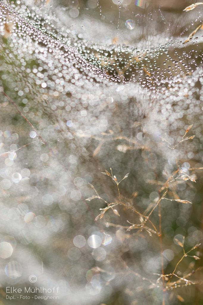 Tau Spinnenweben zart Tropfen