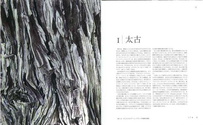 樹木はどれだけ長生きするのか。第1章【太古】では個体として、また種としてのはかりしれない寿命を考える