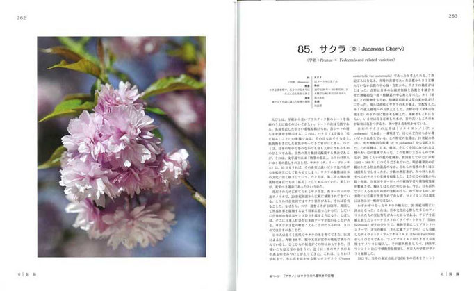 日本文化を象徴するともいえるサクラは、江戸時代に200もの品種が生み出され、いくつかは欧州に渡り、日本に逆輸入された