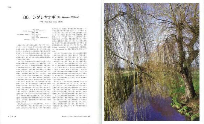 シダレヤナギは中国北部のオアシスが原産で、リンネによる学名はバビロン川にちなんでいるが、実は誤訳に基づいていた
