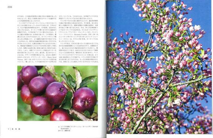 中央アジアが原産というリンゴ。世界各地で固有種が生まれ、少なくとも7500種が知られている
