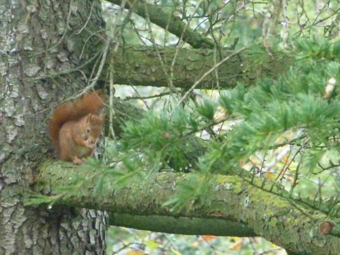 Jeux de l'écureuil