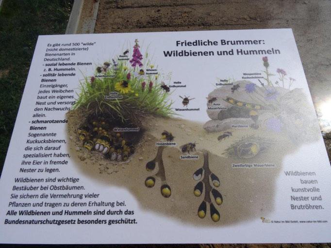 Die Tafel für das Sandorium erklärt, welche Bienen und Hummeln hier leben.