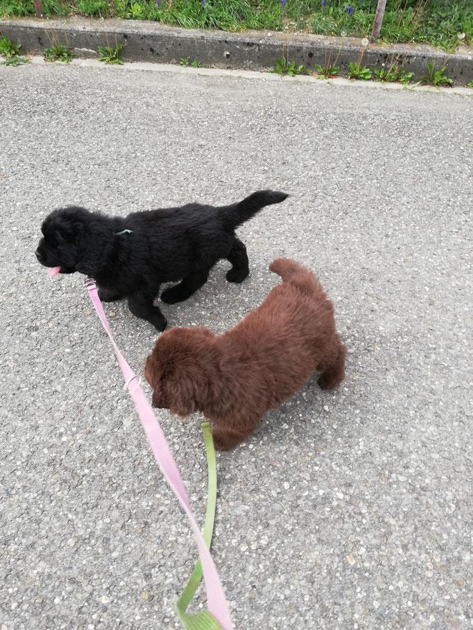 Iuna und Inuk unterwegs