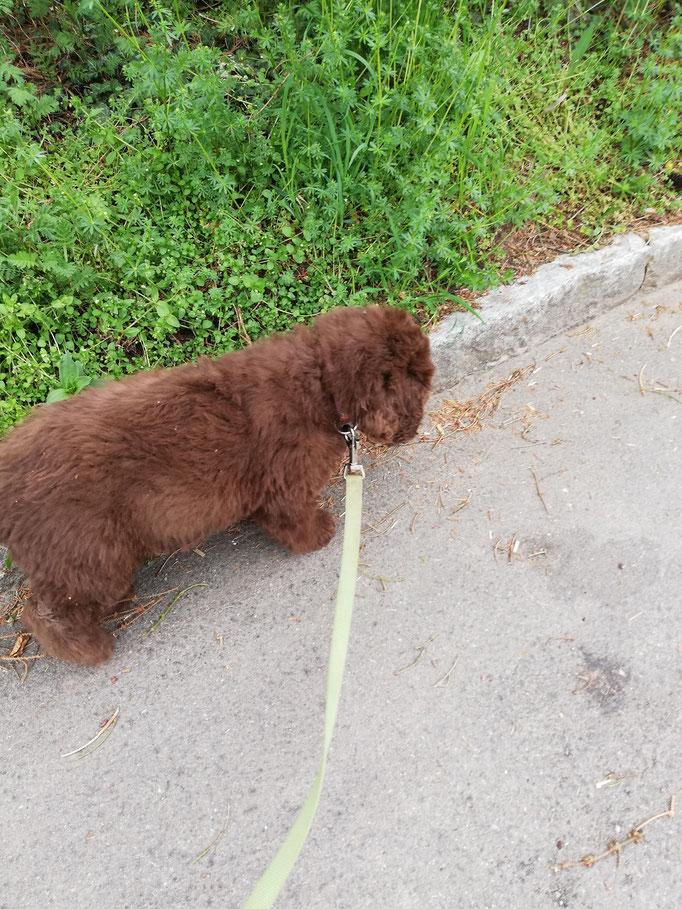 Inusch auf dem ersten Spaziergang