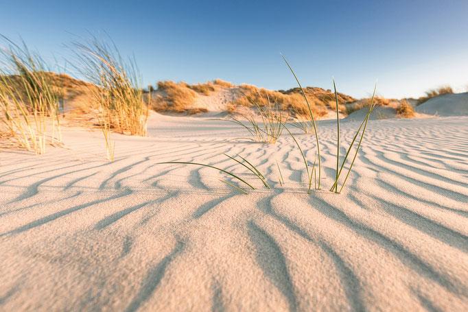 Helmgras in de duinen van Terschelling © Jurjen Veerman