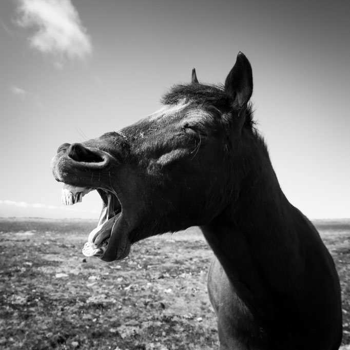 Laughing Horse @ PICO