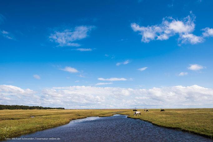 Landschaft an der Küste von Dänemark