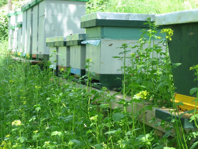 Bienenstand im Sommer