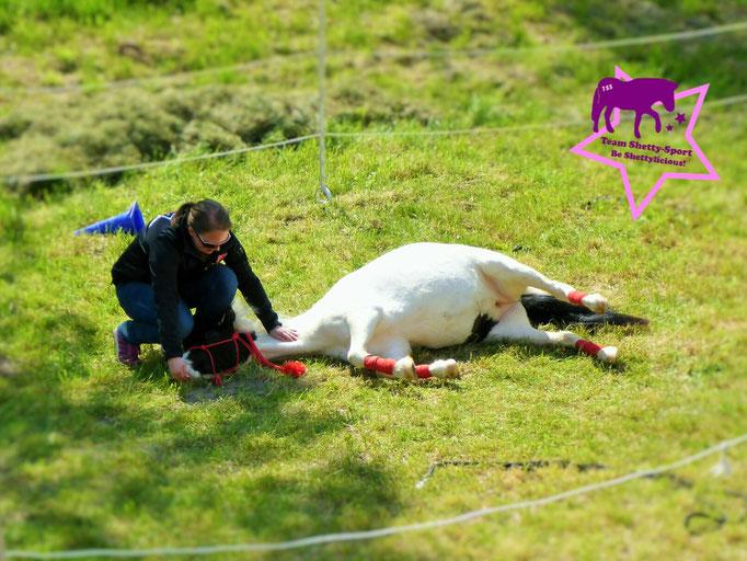 """Vertrauen: Pony legt sich auf Kommando hin. Wie bringe ich einem Pferd das Liegen bei? Schaut doch mal unter """"Training"""""""