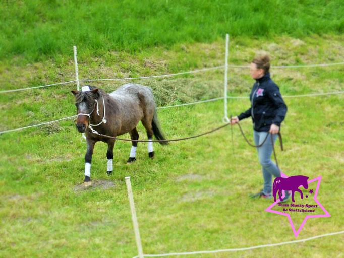 Schloss Grünau: Shetty Rony-Pony an der Longe