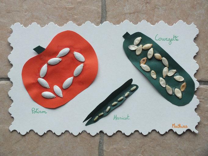 collage de graines de courgette, citrouille et haricot sur forme en carton de couleur, pour imiter un légume coupé en deux