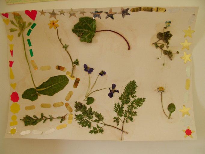 tableau de fleurs et feuilles ramassés lors des promenades