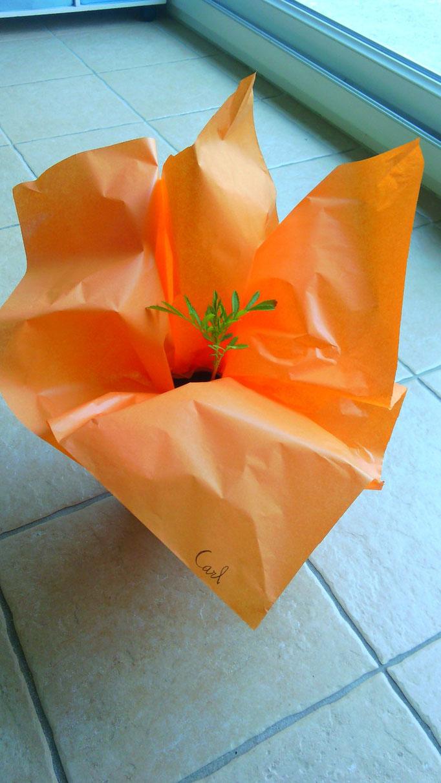 emballage plante pour la fête des mères