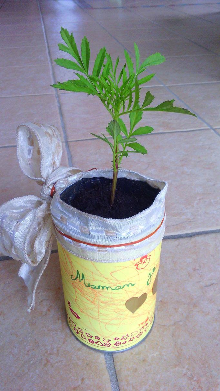 plante pour la fête des mères dans un cache pot décoré (boite de café)