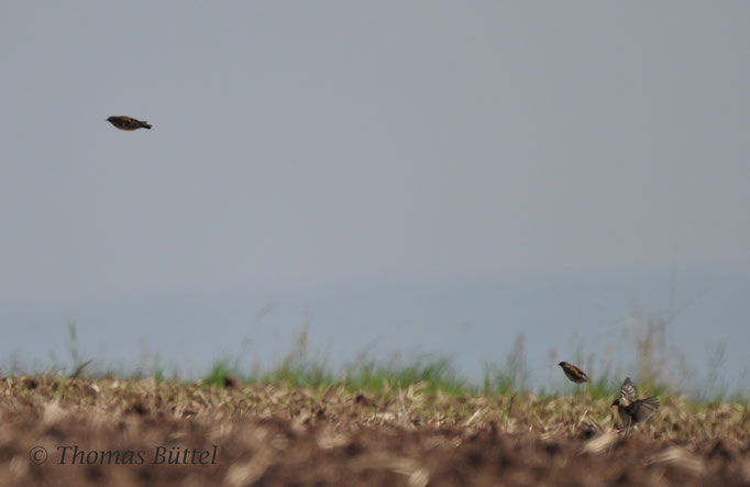 Woodlarks landing