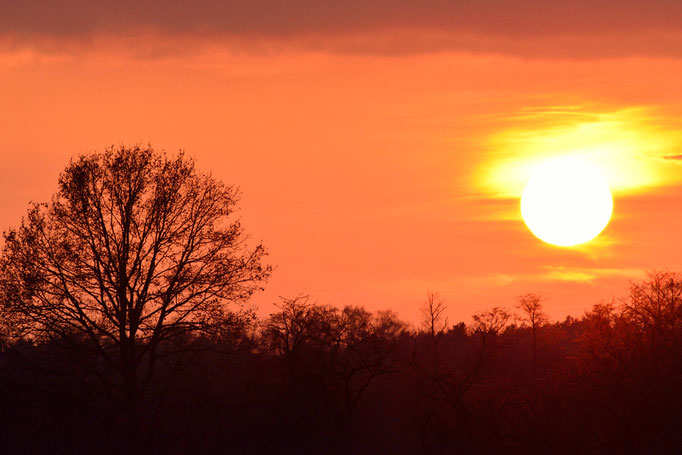 Spreeau, Brandenburg 22.11.2014, Sonnenuntergang