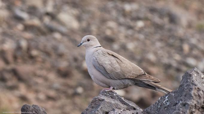 Fuerteventura , Januar 2017