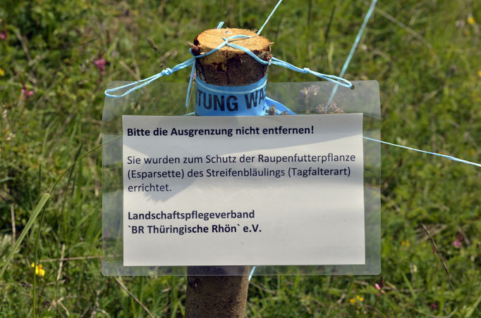 Thüringen 01.06.2014, Polyommatus damon