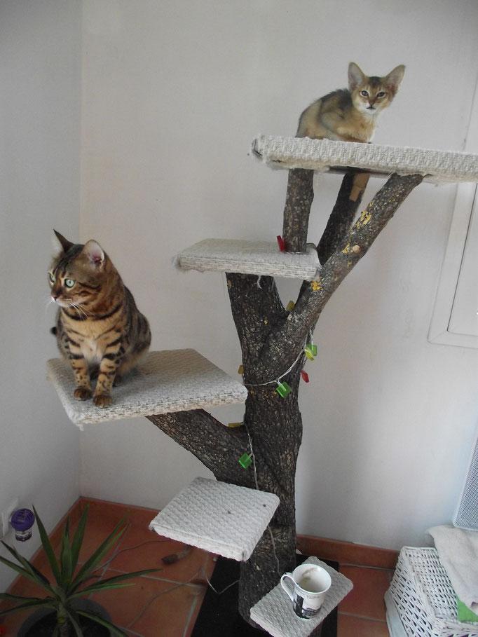 Superbe arbre a chat fait maison, j'ai commandé le même à Philippe :)