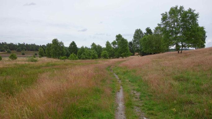 Lüneburger Heide Sehenswürdigkeit Weseler Heide