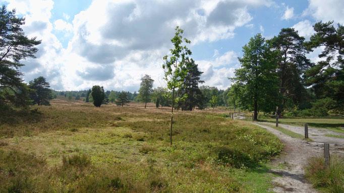 Wanderung durchs Büsenbachtal