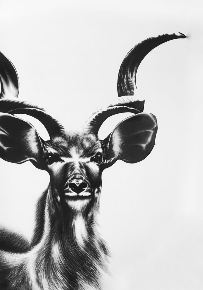 Kudu VI | 2017 | 100 x 70cm | Charcoal on Fabriano-papier | Private Collection: Switzerland (Sold)