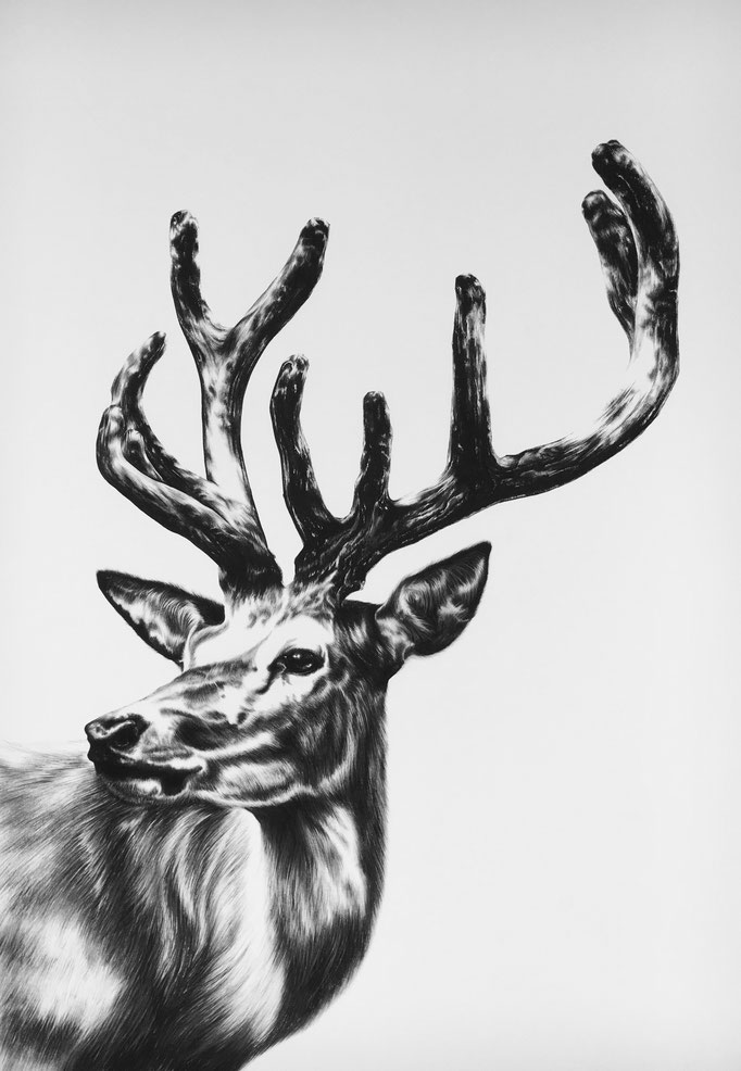 Hirsch III   2014    0.7 x 1m   Charcoal on Fabriano-paper   On Exhibition at Kunst in Spreitenbach, 9 Feb - 23 March ***